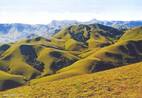Nilgiri Tahr in Grass Hills